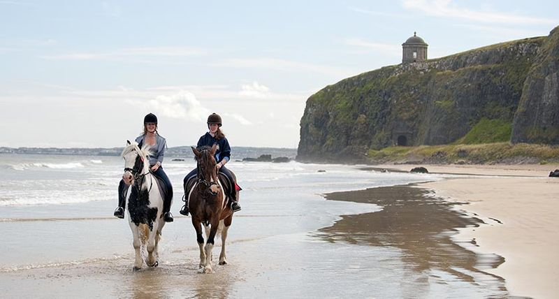 10 Dog Friendly Walks In Northern Ireland Perfect For