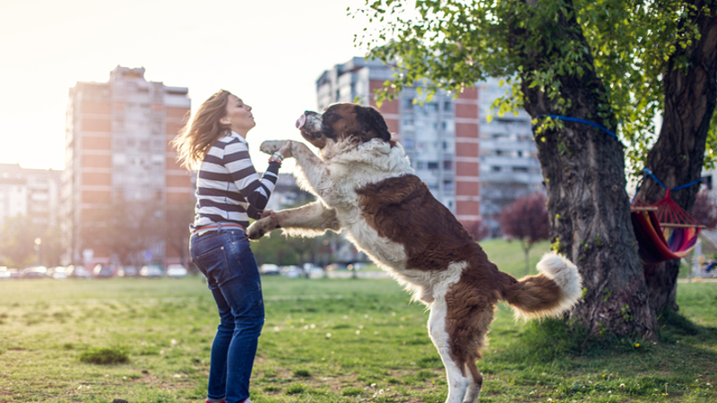 Scientists reveal 19 gestures that dogs use to communicate with their owners