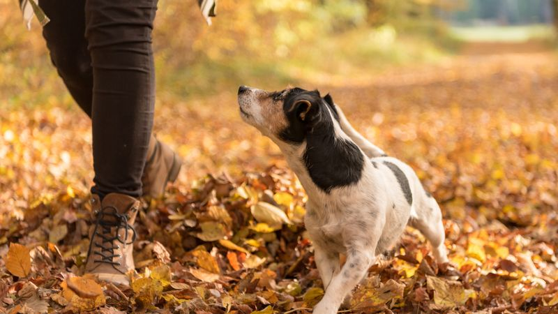 Top places to walk your dog in Manchester