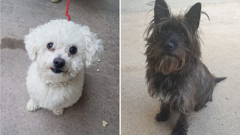 10 lonely Northern Ireland rescue dogs in desperate need of a new home