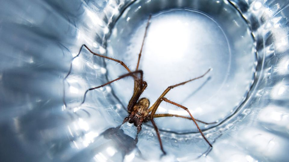 10 ways to spider proof your house trending news metro for How to stop spiders entering your house